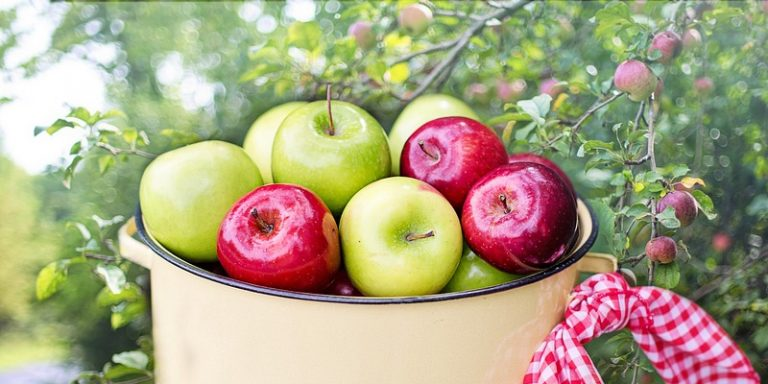 How Long Do Apples Last