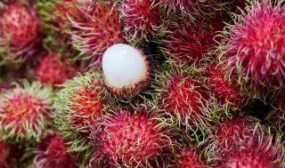 How Long Does Rambutan Last