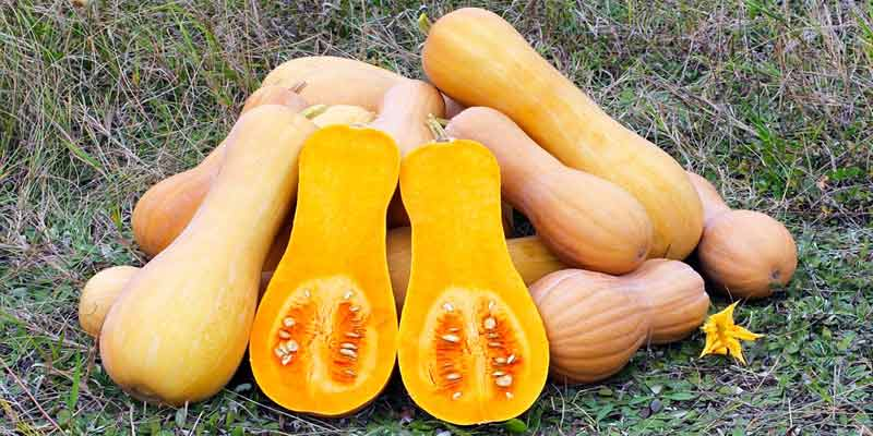 Does Butternut Squash Go Bad