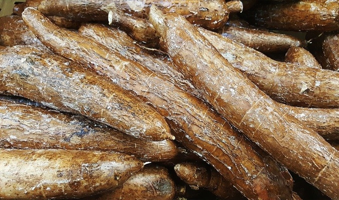 How Long Does Cassava Last