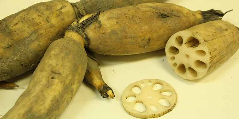Can You Freeze Lotus Root