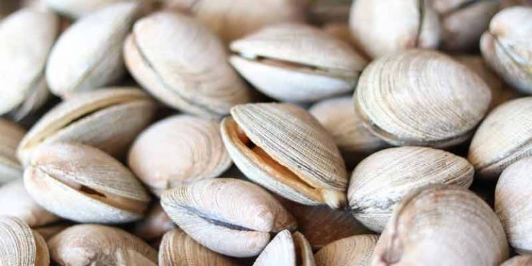 Can You Freeze Clams