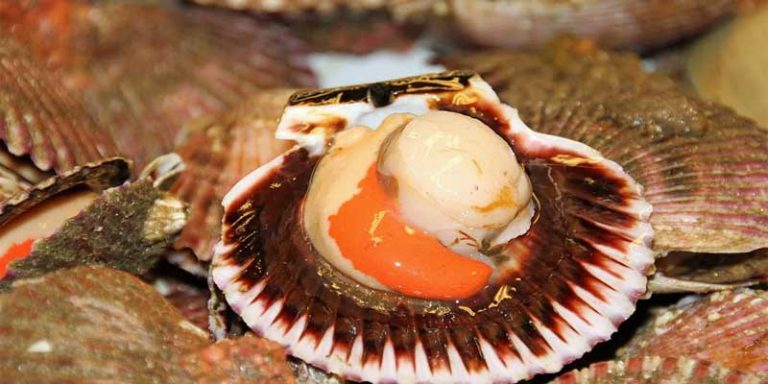 Can you freeze scallops