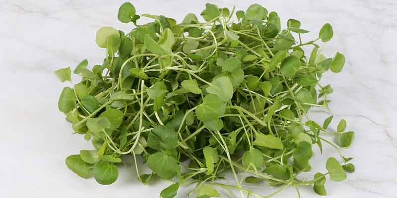 How Long Does Watercress Last