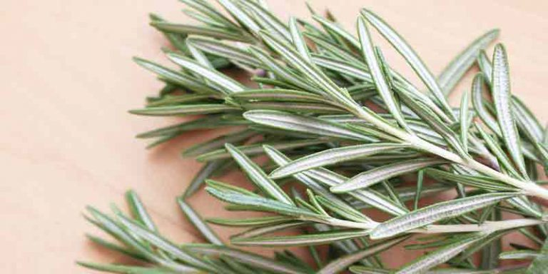 Can You Freeze Rosemary