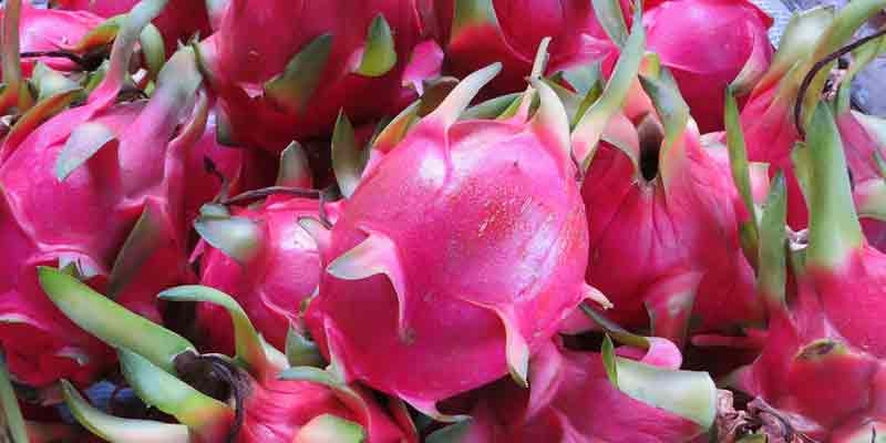 Can You Freeze Dragon Fruit