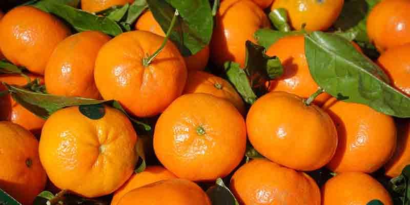 Can You Freeze Mandarin Oranges