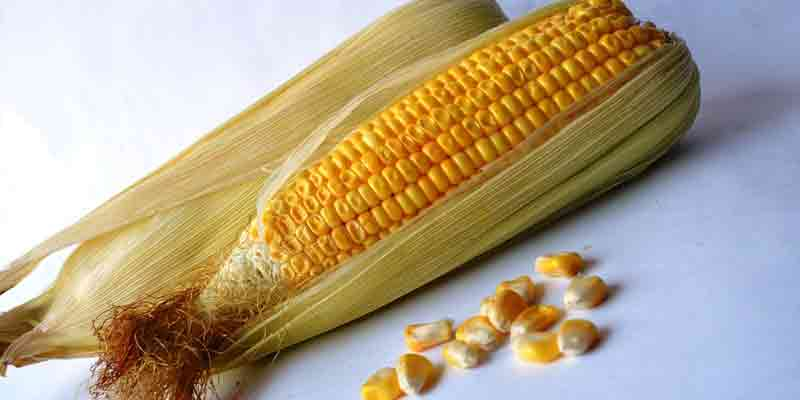 Can You Freeze Sweetcorn