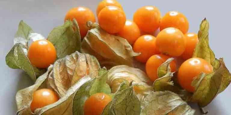 Can You Freeze Tomatillos