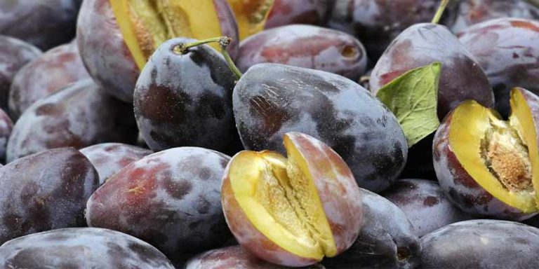 Can You Freeze Plums