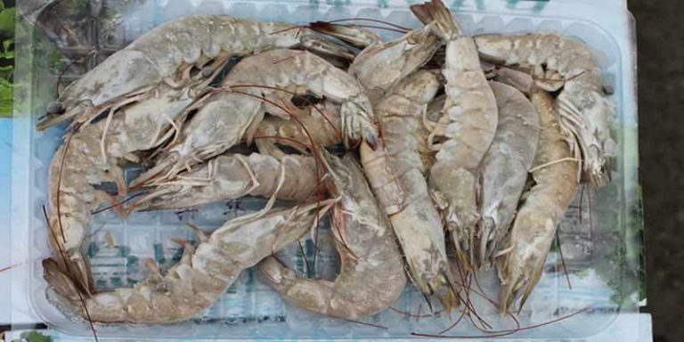 Does Frozen Shrimp Go Bad